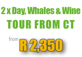special-hermanus-whales-wine-tour-capetown